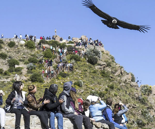 Arequipa – Colca Canyon <span>1 day full day</span>